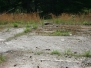 Markers, Graves,Bulltown
