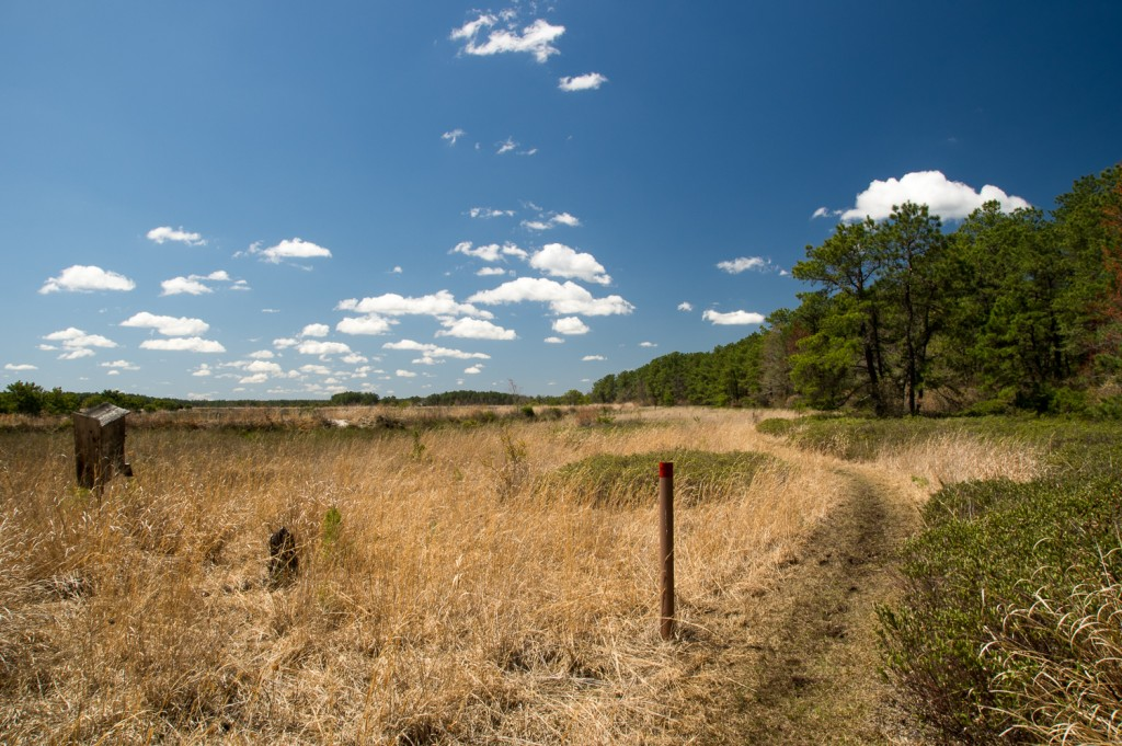The Red Trail where it enters the DeMarco Cranberry Meadows Natural Area.