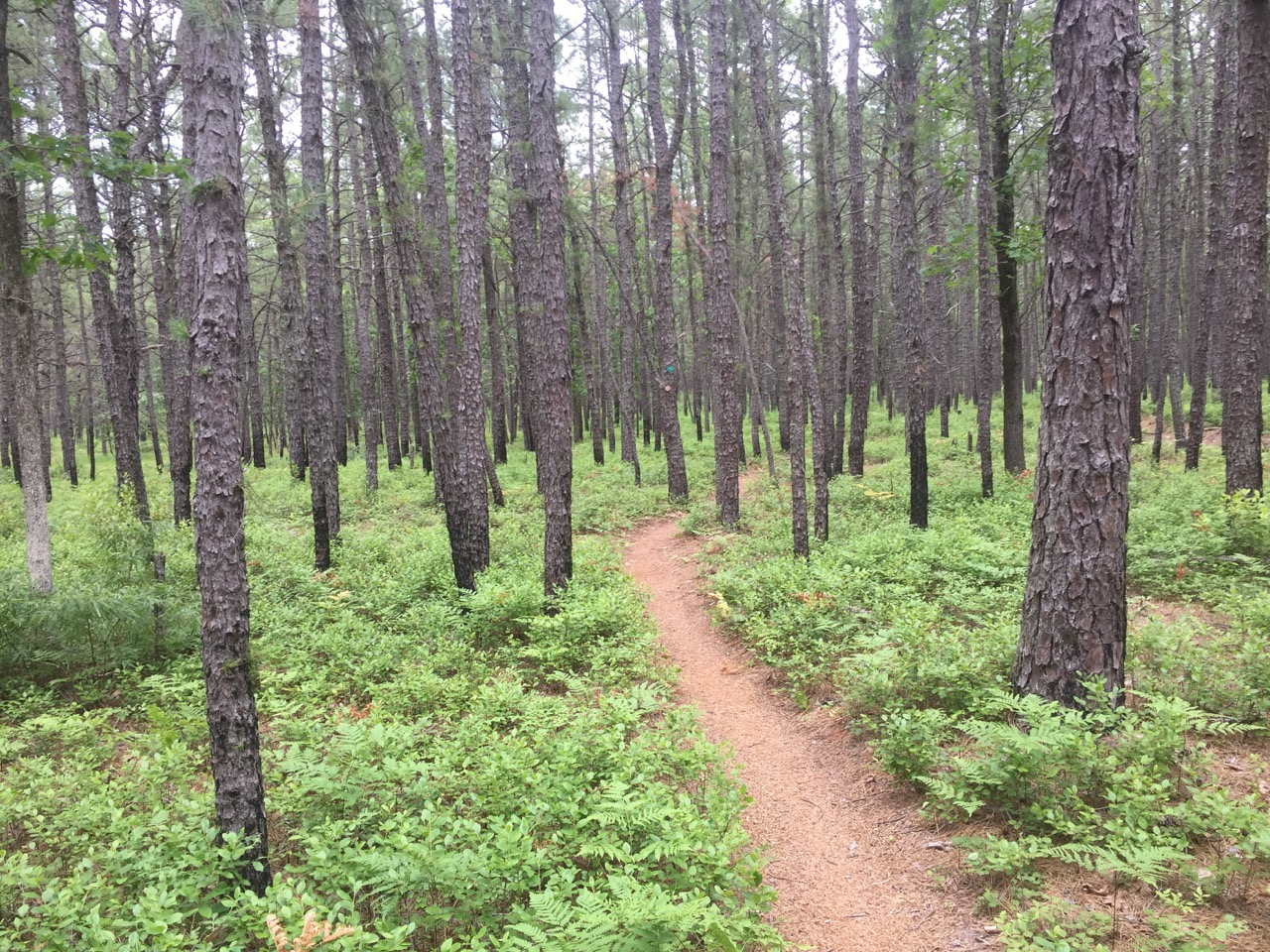 NJPineBarrens com – The Pine Barrens… One Click Away!